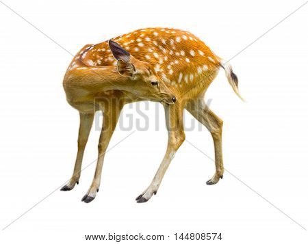 Deer cute patterned spots deer isolated on white background.