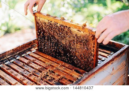 Frames Of A Bee Hive. Beekeeper Harvesting Honey. The Bee Smoker