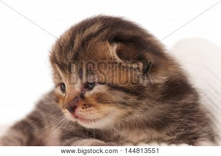 Cute newborn kitten on a knitted scarf over white background