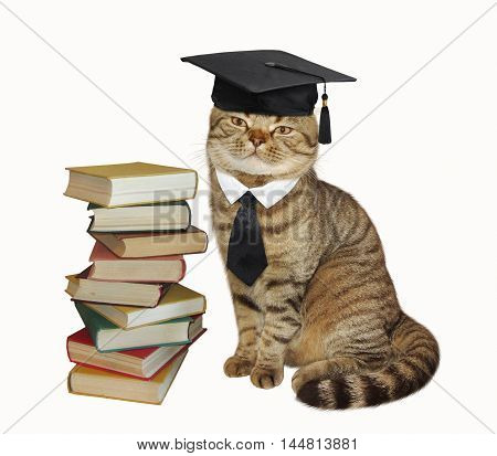 A scottish straight cat is sitting next to a stack of books on white background.