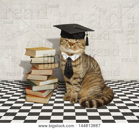 A scottish straight cat is sitting next to a stack of books.