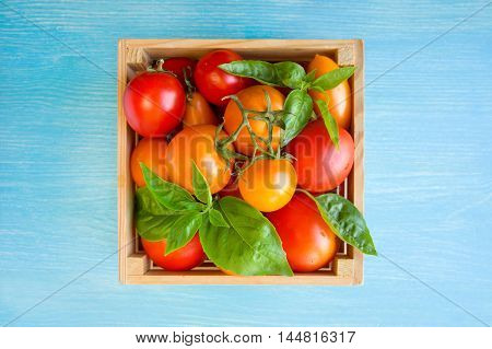 Fresh red and yellow tomatoes and basil in box on a blue background. Top view with copy space.