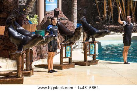 LA LAJITA FUERTEVENTURA SPAIN - SEPTEMBER 11 2015: Shows sea lions in the pool Oasis Park Fuerteventura Canary Island Spain