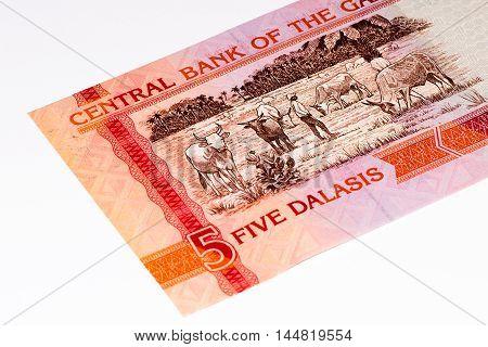 5 Gambian dalasi bank note. Gambian dalasi is the national currency of Gambia