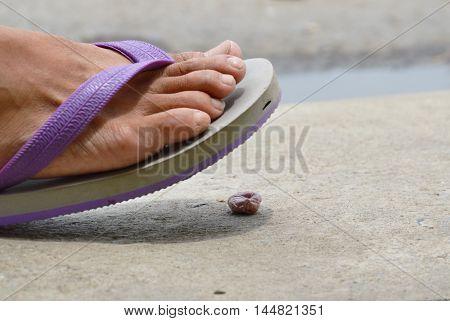 foot in slipper stepping on gum scrap on ground