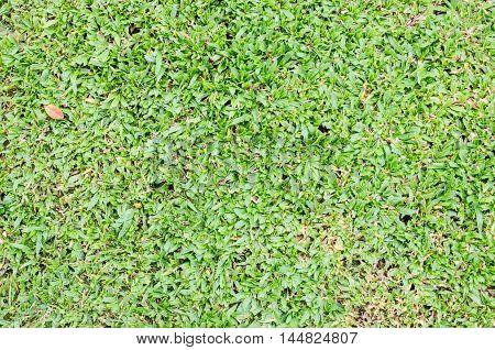 Bright  natural fresh green grass background .