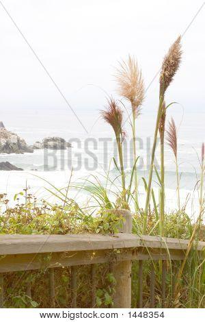 Walking Path Along Coastline