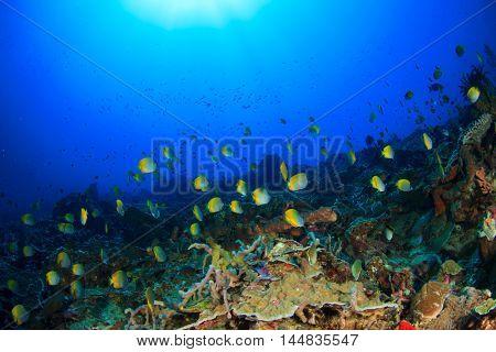 Coral reef fish. Underwater seascape in ocean