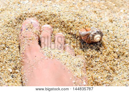 Closeup of a man's foot and shell on the seashore