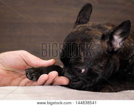 Black Dog Paw In Male Hand. The Concept Of Friendship, Trust, Empathy