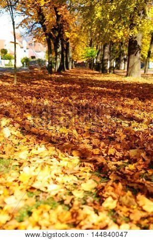 Beautiful autumn park. beautiful autumn ocre leaves
