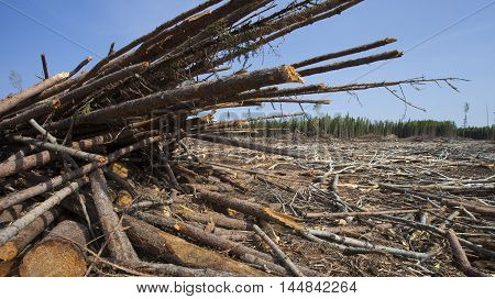 Piles of logs after a crew got done in a forest in Saskatchewan Canada