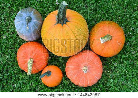Pumpkins and squashes varieties. Fresh harvest on grass