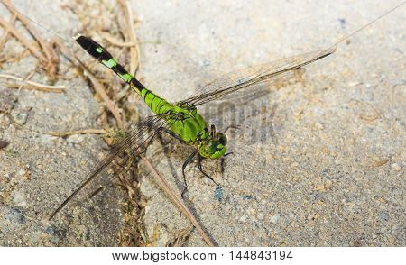 Green dragonfly that is sitting on some sand set bricks