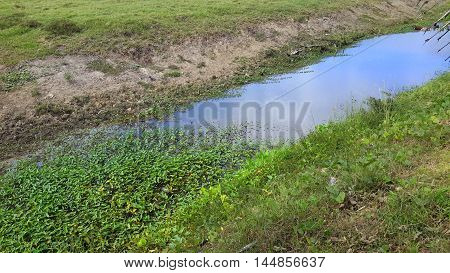 irrigation ditch with lotus water plants, southern Thailand