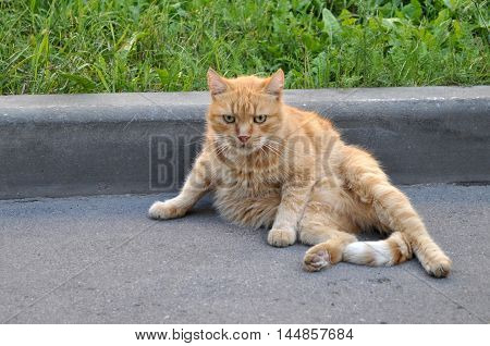 Cat sitting on a street. Big serious street ginger cat. Lonely cat on the street watching into nowhere.