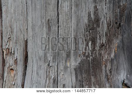 simple structural Texture of dry wood background
