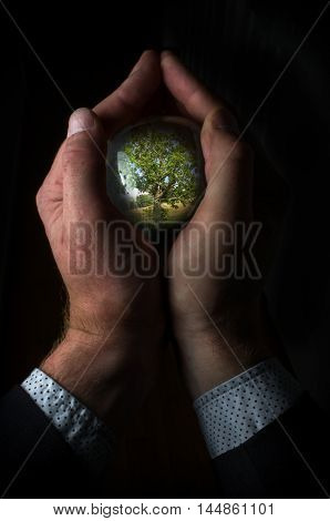 Fortune teller magic crystal ball shows old oak tree
