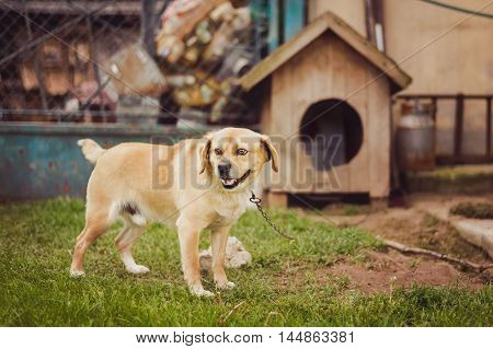 Dog on chain, doghouse, rural environment, Poland.