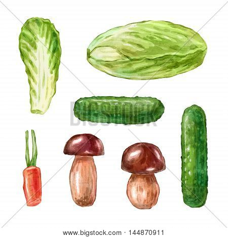 Watercolor vegetables. Big collection of hand drawn illustrations. Good for book illustration, magazine or journal article.