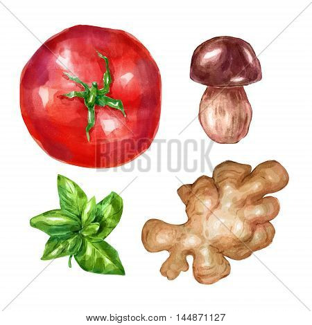 Watercolor vegetables mint white mushroom tomato ginger. Big collection of hand drawn illustrations. Good for book illustration, magazine or journal article.