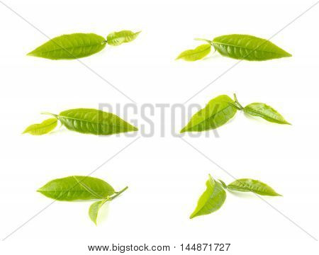 Green tea leaves collection isolated on white background.