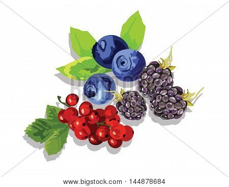 Blackberry, blueberry and cranberry fruit set Vector in Watercolor style