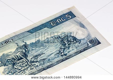 5 Ethiopian birr bank note. Birr is the national currency of Ethiopia