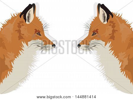 Fox on white background reflected Vector illustration