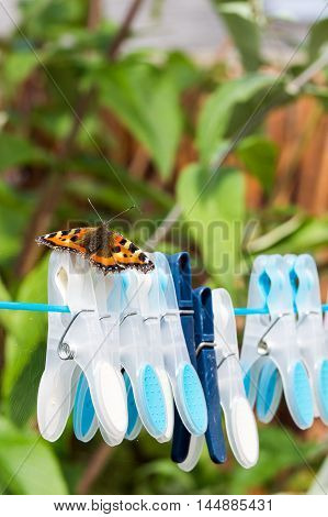 Small Tortoiseshell butterfly (Aglais urticae) resting on clothespins on a washing line.