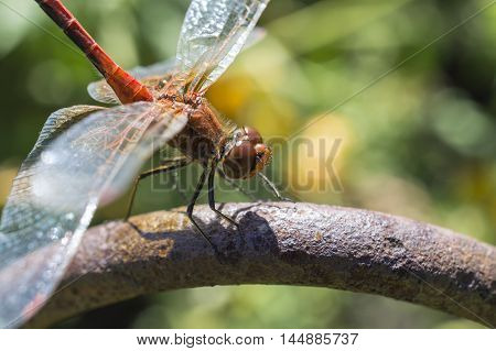 The dragonfly the vacationer on a bar