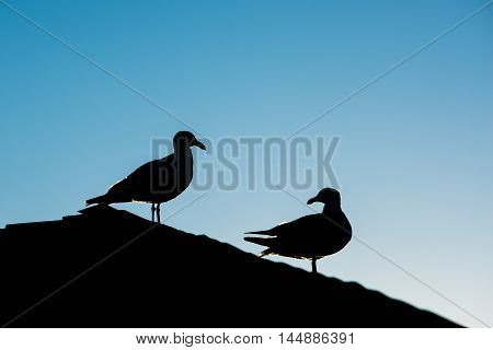 Silhouette of two seagulls standing on roof during sunset against blue sky with one looking back