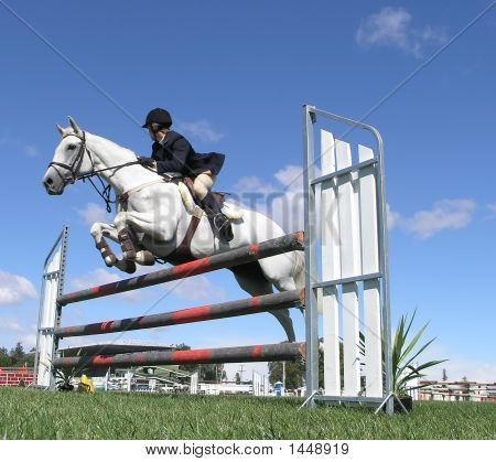 White Show Jumper