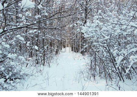 photo of a winter forest after a heavy snowfall in Russia, Bashkortostan