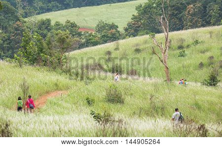 Nakorn Ratchasrima Thailand - July 14 2016: Travelers trekking on brown mud way surrounded by green thatched meadow in Khao Yai national park.