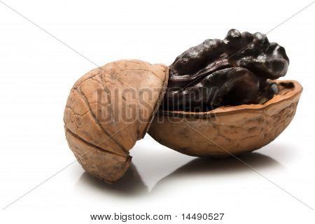 Walnut  in half a shell