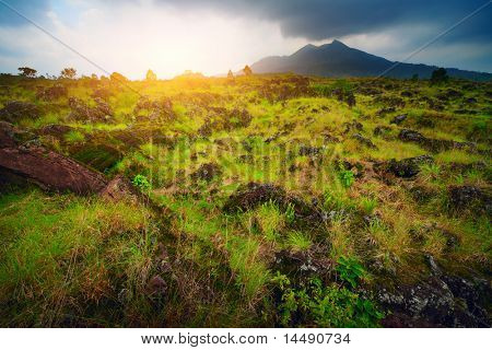 Plants among rocks on volcano soil. Volcano Agung. Bali