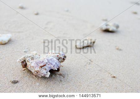 Sea shell, stone, star, stone on beach