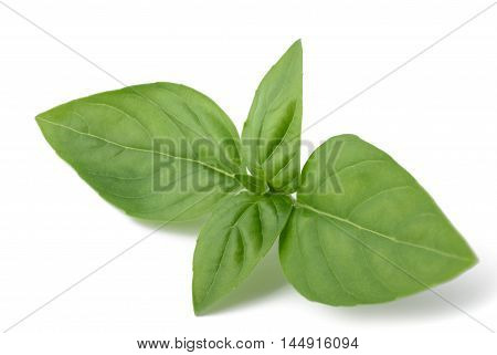 Basil sprig isolated on a white background