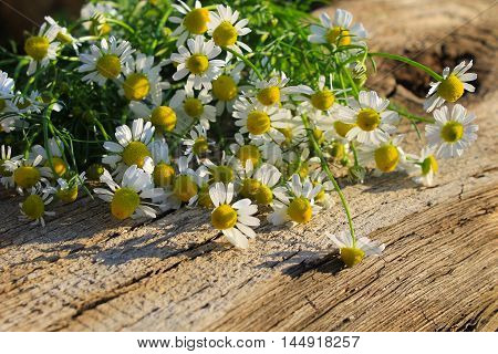 Pretty camomile flowers on the wooden background