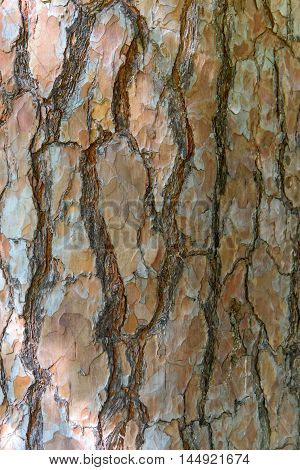 Conifers bark background with a larch bark