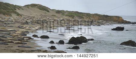 Panoramic view of Pideras Blancas Beach - Elephant seal rookery beach in California