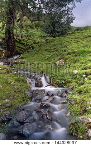 Mountain Stream in the Lake District area of Ska Fell on a cloudy and windy day..  A long exposure has caused blurred motion of tree branches and stream.