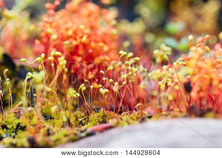 Red Macro Moss Seeds In Forest