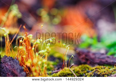Abstract colorful nature background with macro moss spores on blurred background. Shallow focus