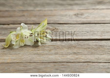 Alstroemeria Flowers On A Grey Wooden Table
