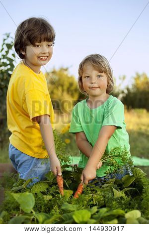 Children with a carrot in the garden. Two boys with vegetables in farm.