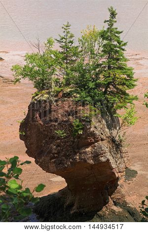 Hopewell Rocks are natural Formations with different sizes dark sedimentary formed by tidal erosion from shoreline of Bay of Fundy in New Brunswick top part is covered by bushes and small trees