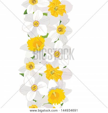Floral seamless vertical border spring pattern. Flower daffodil white background. Floral seamless wreath with flowers.