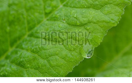 closeup of a green leaf with raindrops
